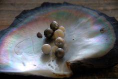Pearls Fakarava