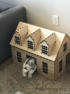 Bunny enters her house within a house - May 28, 2015