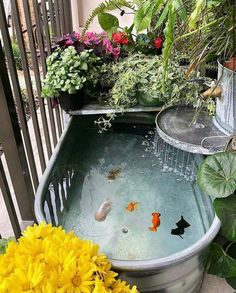 Aquarium Hobby: --- taking the pond game to a whole new level! Such a neat setup! - — taking the pond game to a whole new level! Such a neat setup! Small Water Gardens, Indoor Water Garden, Garden Plants, Fish Pond Gardens, Fish Garden, Tropical Gardens, Tropical Fish, Ponds Backyard, Backyard Landscaping