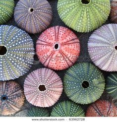 Pretty sea urchins. (Shutterstock image)