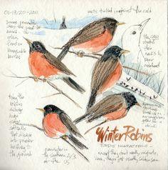 Sketching in Nature: birds