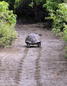 The turtles of the world--where we would be without those willing to move slowly