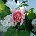 .My garden wishes