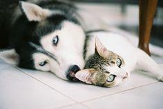 【画像】 夫婦か!?仲の良すぎる犬と猫が激写されるwwwwww - ゴールデンタイムズ