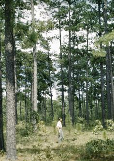 longleaf girls Longleaf declaration of easements, covenants, conditions and restrictions, articles of incorporation and by-laws condominium associates 23548 state road 54.