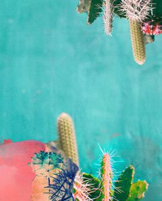Lessons in Life From Cactaceae | Free People Blog #freepeople