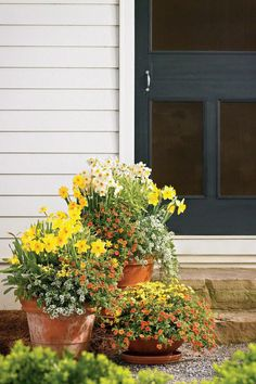 Bring on Spring! | Enjoy nonstop color all season long with these container gardening ideas and plant suggestions. You'll find beautiful pots to adorn porches and patios. You may not have the space or patience to become a master gardener, but anyone can master container gardening. It's a cinch—all you need is a container (a planter in true gardener speak), potting soil, some plants and you're ready to go. Thinking of container gardening like this, it's easy to see why container gardening…