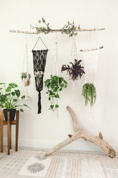 Most up-to-date Photos Collection of Macrame Plant Hangers, Set of 5 Hanging Planters or Sold Separately, Hanging Plant Stand Suggestions When there is small space for the keeping flowerpots, hanging flowerpots certainly are a excellent O Small Plants, Indoor Plants, Inside Plants, Indoor Gardening, Air Plants, Cactus Plants, Outdoor Gardens, Decoration Plante, Macrame Plant Hangers