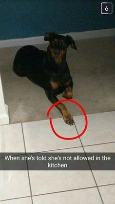 Funny Pictures For Today (#97) #DogFunny #FunnyThings