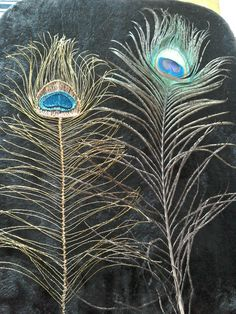 Wire and original Peacock Feather