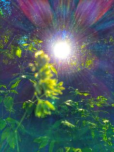 Im Losing My Mind, Lose My Mind, Nature Is Speaking, Earth School, Sun Light, Peace On Earth, Natural Energy, Human Condition, Lens Flare