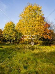 colorful trees - colorful trees against a blue sky