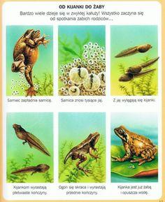 Animal Activities, Amphibians, Animals For Kids, Geography, Biology, Habitats, Kindergarten, Homeschool, Water