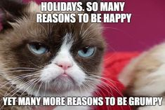 Teen Titans Cosplay, Reasons To Be Happy, Funny Qoutes, Grumpy Cat, I Laughed, Hilarious, Lol, Cat Stuff, Memes