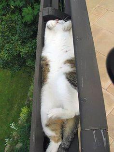 Flipante recopilación de 16 gatos encajando en sitios raros