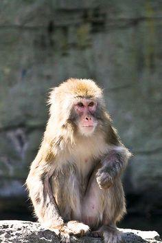 Enjoying the Sun (Central Park Zoo)