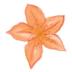 star flower- orange