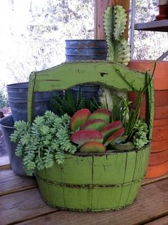 Wooden green container planted with kalanchoe, fire sticks, aloe, and sedum~ Nice succulents