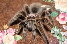 Spidey the tarantula and I visited a day care center to teach children about tarantulas! Pet Spider, My Flower, Flowers, You're My Favorite, Creature Feature, Love Bugs, Cool Pets, Cute Animals, Creatures
