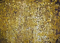 """Klimt's Rust"""" ...enhanced photographic print..."