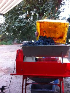 Crushing and stemming the grapes