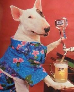"Spuds MacKenzie, and he first appeared in commercials for Bud Light and was known as the ""original party dog"" in the late Loved him! Bud Light, Light Beer, English Bull Terriers, 80s Kids, My Childhood Memories, Dogs Of The World, Back In The Day, Puppy Love, Pop Culture"