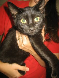 Thomason - 4 month old, neutered male, domestic short hair mix, ID#070202G