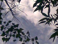 A nyárfa szív alakú levelei, és a fűz csónakocskái - majdnem fekete fehérben