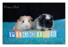 My Daughters Pigs