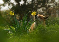 Spring has sprung... by Matt Binstead