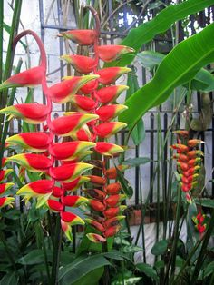 Garden in Santa Ana, Costa Rica. Dream Garden, Home And Garden, Amazing Greens, Tropical, Hawaiian Flowers, Exotic Flowers, Beautiful Gardens, Costa Rica, Gardening Tips