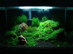 Planted Aquariums - Imgur
