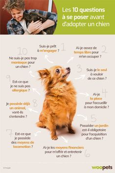 10 questions auxquelles vous devez réfléchir et répondre sérieusement avant d'accueillir un chien dans votre foyer. Cute Puppies, Dogs And Puppies, French Dogs, Puppy Breeds, Cane Corso, Shih Tzu, Dog Treats, Funny Dogs, Chihuahua