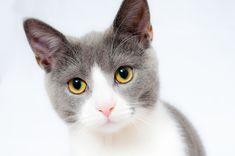 Gratis foto: Kat, Huisdier, Dierlijke - Gratis afbeelding op Pixabay - 1151519