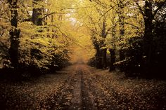 Actually this is neighboring Donadea. The Lime Avenue and back entrance to Donadea Forest. Sports Complex, Castle Ruins, Dublin, Entrance, Ireland, Country Roads, Lime, Fall, Autumn