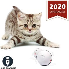 YOFUN Smart Interactive Cat Toy – Newest Version 360 Degree Self Rotating Ball, USB Rechargeable Pet Toy, Build-in Spinning Led Light, Stimulate Hunting Instinct for Your Kitty (White) Homemade Cat Toys, Diy Cat Toys, Pet Toys, Cool Cat Trees, Cool Cats, Cat Exercise, Interactive Cat Toys, Funny Toys, Luz Led
