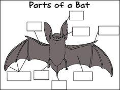 bat diagram label wiring diagram Printable Parts of Bat 73 best bat unit images halloween kids, classroom ideas, activitiesbats and owls labeling activity
