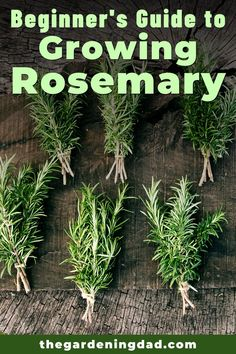 Beginner's Guide to Growing Rosemary will teach you beginner friendly tips, tricks, and ideas for indoors, outdoor, and container gardening! Container Herb Garden, Container Gardening Vegetables, Veg Garden, Edible Garden, Garden Edging, Fruit Garden, Vegetable Gardening, Growing Herbs, Growing Vegetables