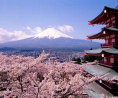 beautiful Japan Wallpaper, Hd Wallpaper, Spring Wallpaper, Desktop Wallpapers, Scenery Wallpaper, Wallpaper Ideas, Nature Wallpaper, Nara Japan, Tokyo Japan