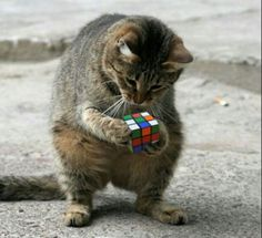 <b>The insanely addictive puzzle is 40 this year.</b> Happy Birthday!