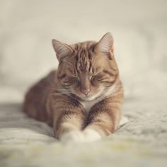 Feline Flu is One of the Most Serious Cat Health Issues Cute Cats And Kittens, I Love Cats, Kittens Cutest, Ragdoll Kittens, Tabby Cats, Funny Kittens, Bengal Cats, Kitty Cats, Orange Cats