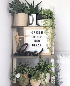house plants and home decor ideas Indoor Garden, Indoor Plants, Deco Nature, Plants Quotes, Plants Are Friends, Green Life, Growing Plants, Decoration, Sweet Home