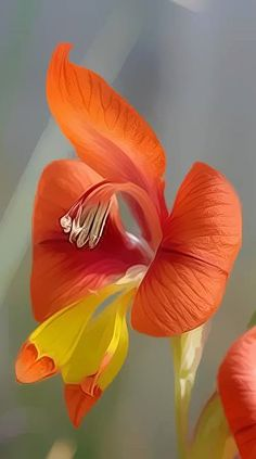New Photo Exotic Flowers orange Concepts Community blooms and also crops can be. New Photo Exotic Unusual Flowers, Rare Flowers, Amazing Flowers, Colorful Flowers, Beautiful Flowers, Unusual Plants, Beautiful Gorgeous, Flower Colors, Tropical Flowers