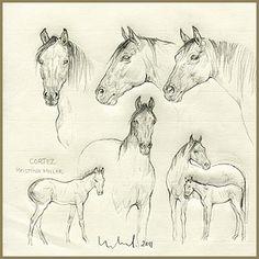 SUSAN LEYLAND sketches Equinesculptures.com