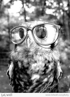 Owl with glasses. Oh my gosh it is so cute!!