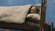 #EG1992 Ordinary Lives, Blanket, Life, Blankets, Carpet, Quilt