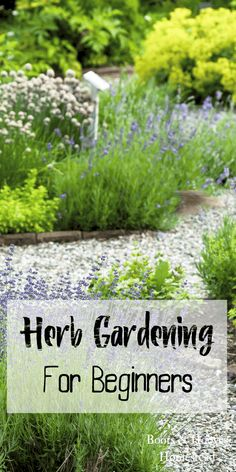 Gardening for Beginners Herb gardening for beginners. Get tips, tricks, and learn the basics of starting an herb garden.Herb gardening for beginners. Get tips, tricks, and learn the basics of starting an herb garden. Garden Types, Herb Garden Design, Diy Herb Garden, Herbs Garden, Garden Beds, Herb Plants, Garden Arbor, Garden Shrubs, Garden Cottage