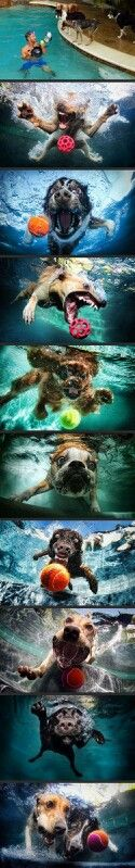 Dogs in water going after the ball... or just going for a swim and regretting it.