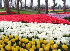 Shanghai Flower Port