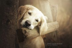 Polish Photography Takes The Most Stunning Photos of Dogs Ever